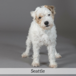 Seattle Best in Show Dog