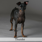 Thunder Best in Show Dog