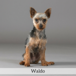 Waldo Best in Show Dog