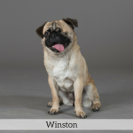 Winston Best in Show Dog