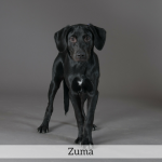Zuma Best in Show Dog
