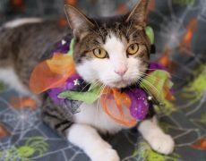 cat in Halloween costume